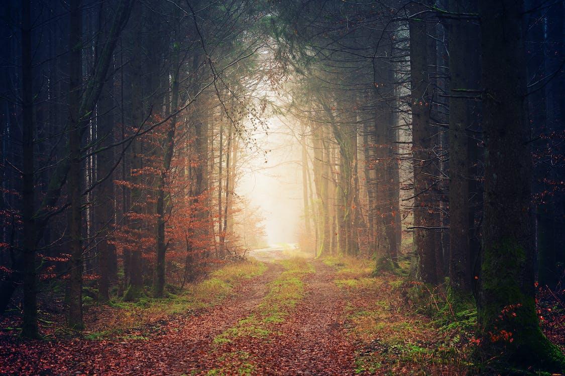 4k tapeta, chodník, fotografie přírody