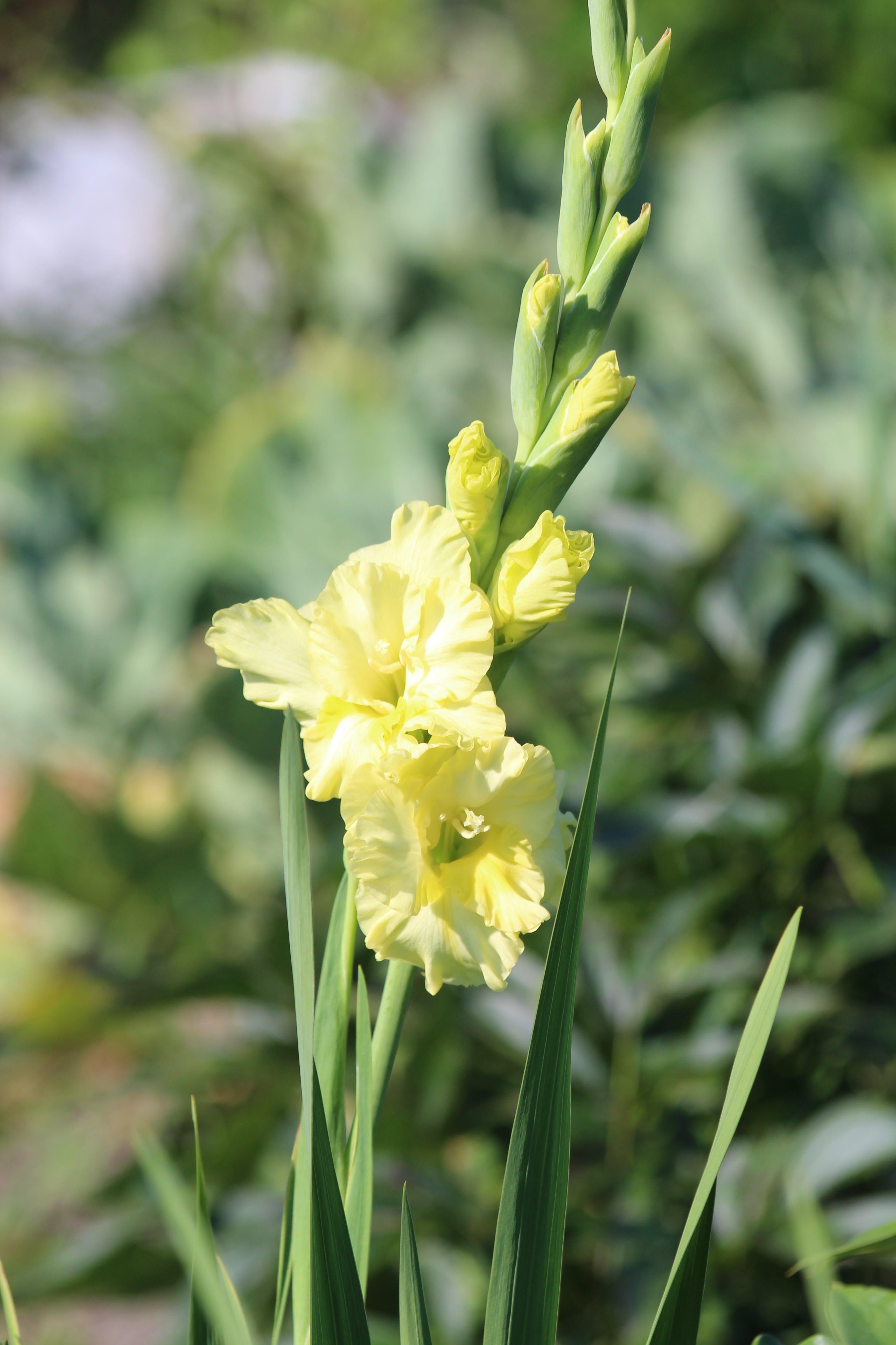 Free stock photo of beautiful, bright, flora, flower
