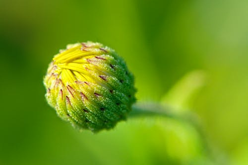 Free stock photo of blooming, flower, green, yellow