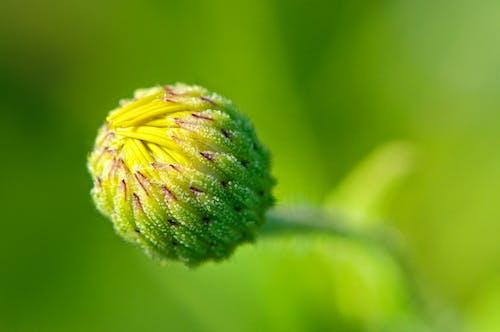 Бесплатное стоковое фото с желтый, зеленый, цветок, цветущий