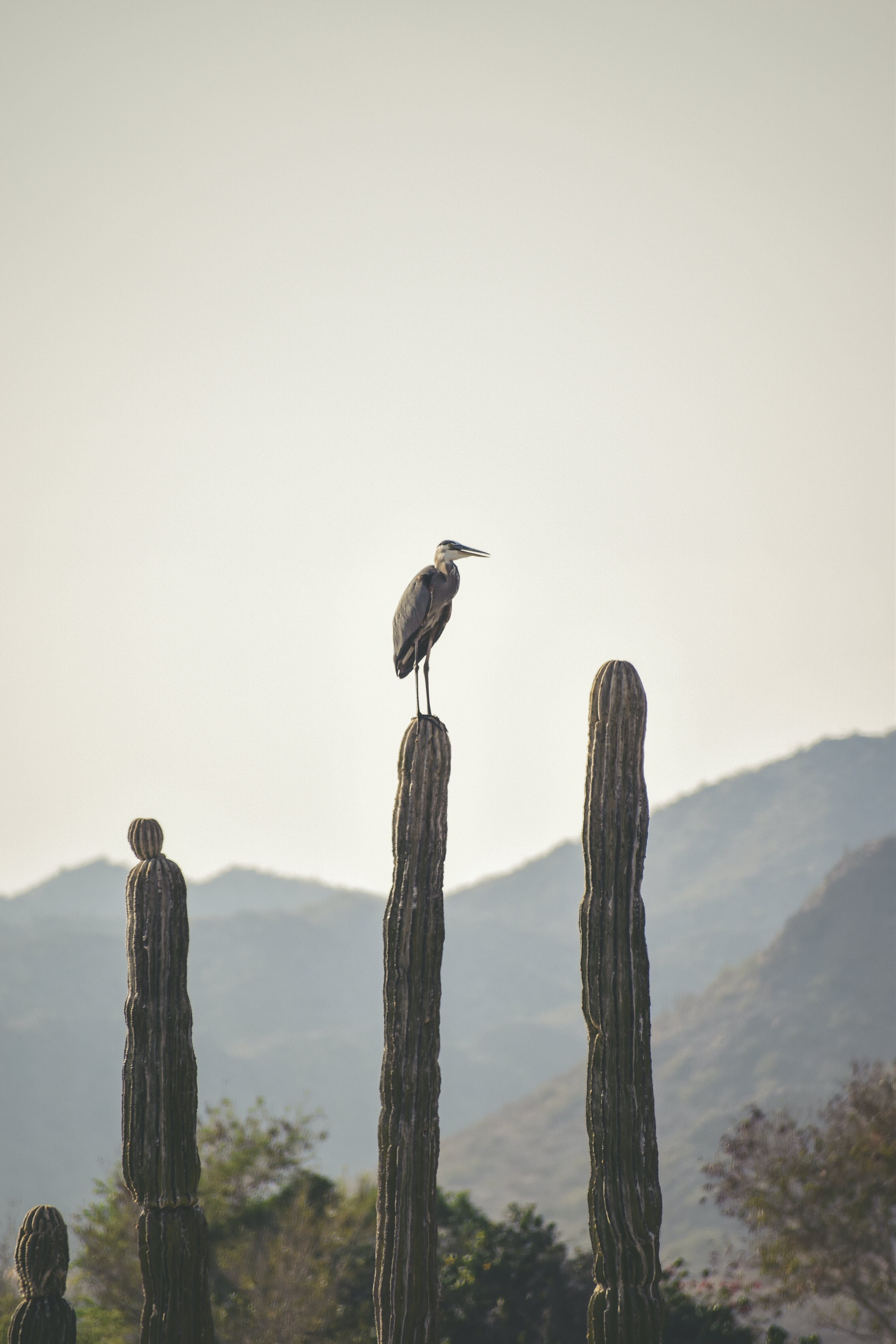 Photo of Heron Perching on Cactus Plant