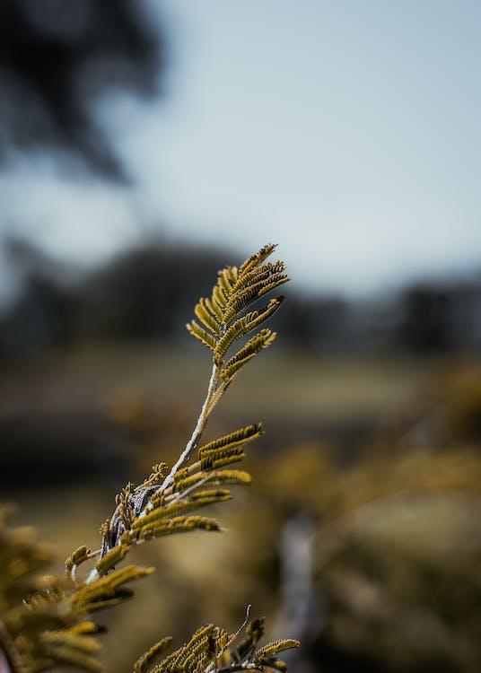 aurinko, kasvi, keskittyminen