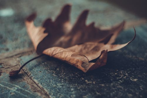 景深, 枯葉, 楓葉 的 免費圖庫相片