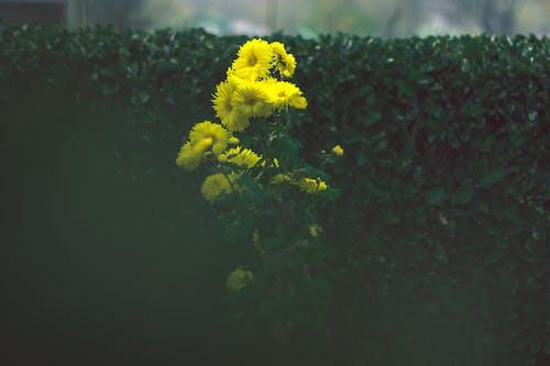 Kostenloses Stock Foto zu gelb, gelbe blume, gelbe blumen, grüne pflanzen