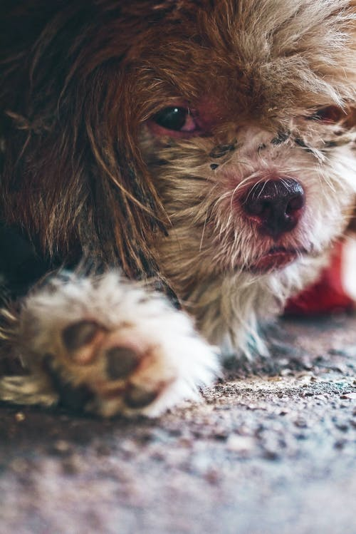 Безкоштовне стокове фото на тему «пес, собака»
