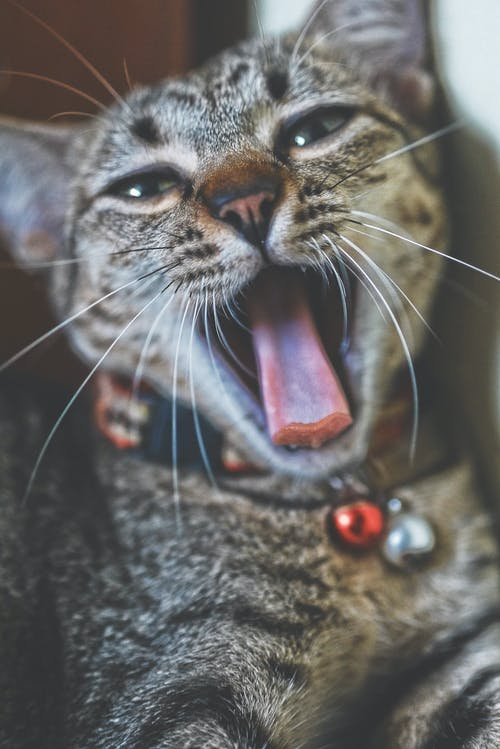 Free stock photo of cat, my cat