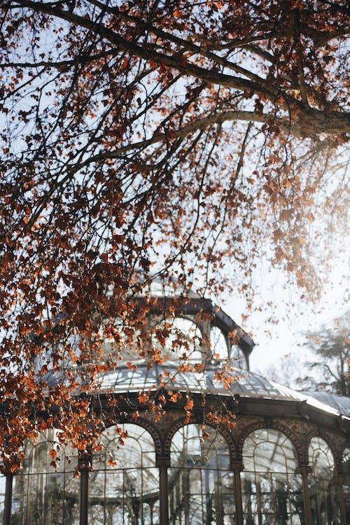 Brown Leafed Tree
