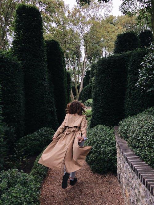 Gratis stockfoto met bloeiend, bloesem, bomen, daglicht