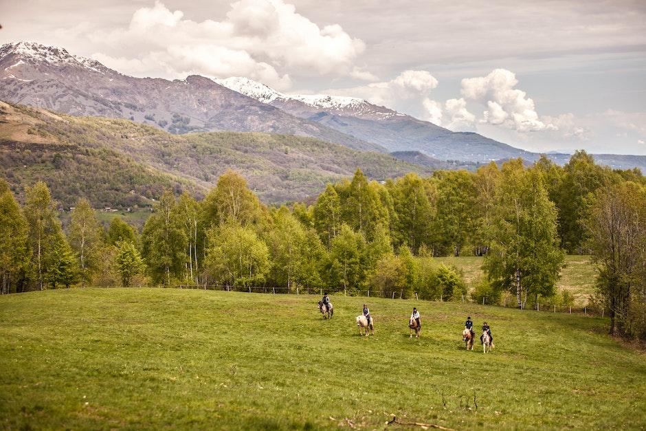 animals, chiusella valley, horses