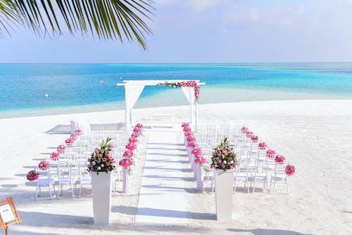 Бесплатное стоковое фото с вода, декор, дневной свет, кокосовые пальмы
