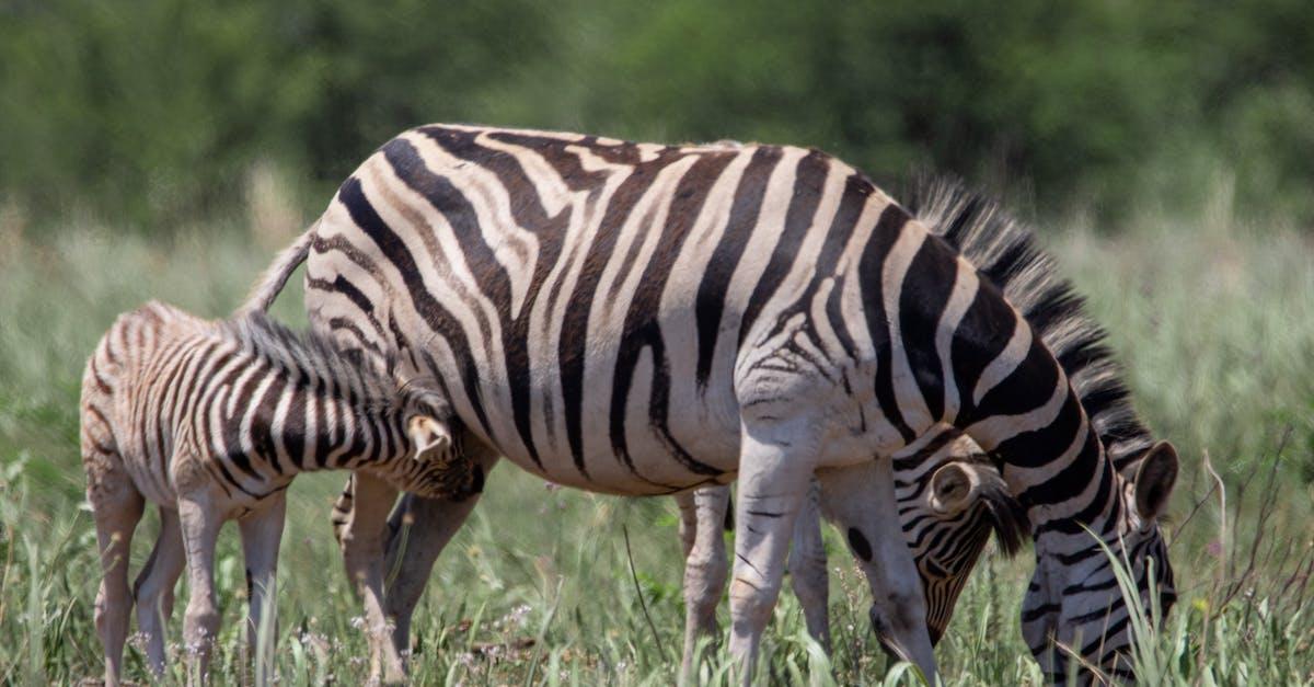 zebra wildlife south africa - HD5472×3648