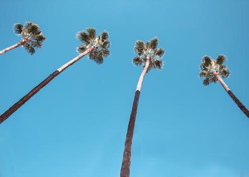 Foto d'estoc gratuïta de arbre, blau, blau cel, branca