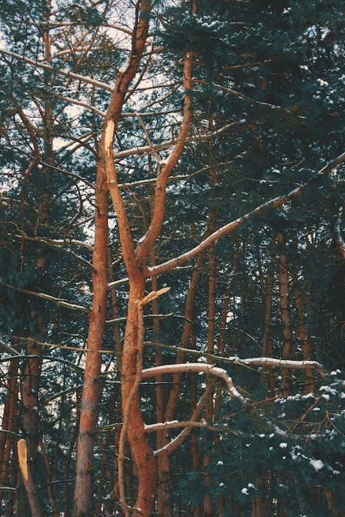 Darmowe zdjęcie z galerii z drzewa, gałęzie, las, na dworze