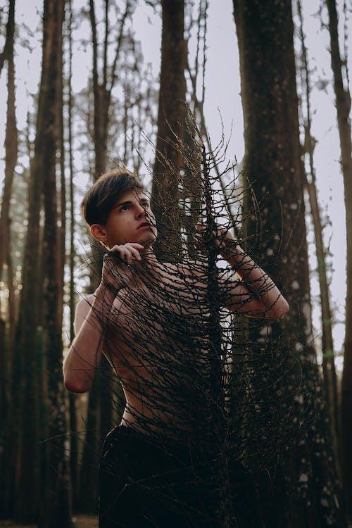Hombre, Tenencia, árbol