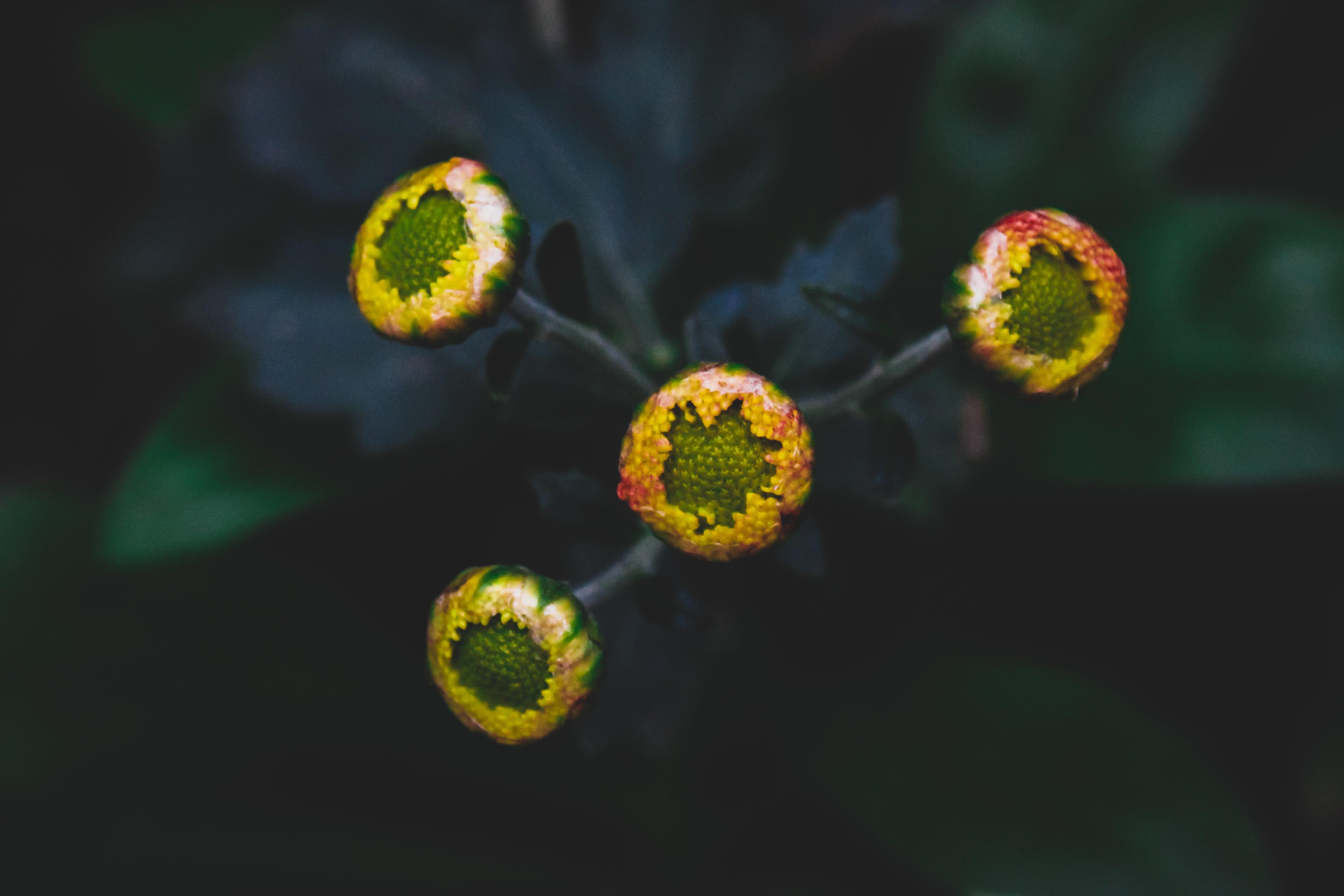 Základová fotografie zdarma na téma barevný, barvy, flóra, krásné květiny