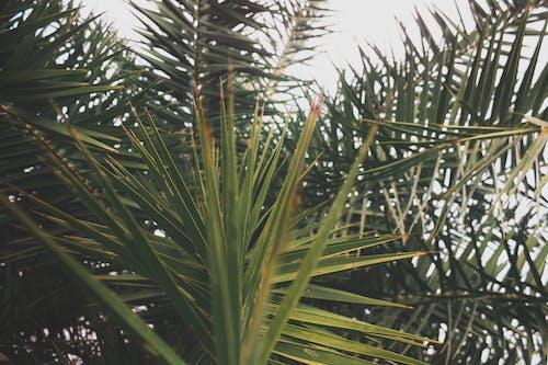 Kostenloses Stock Foto zu baum, draußen, farben, grün