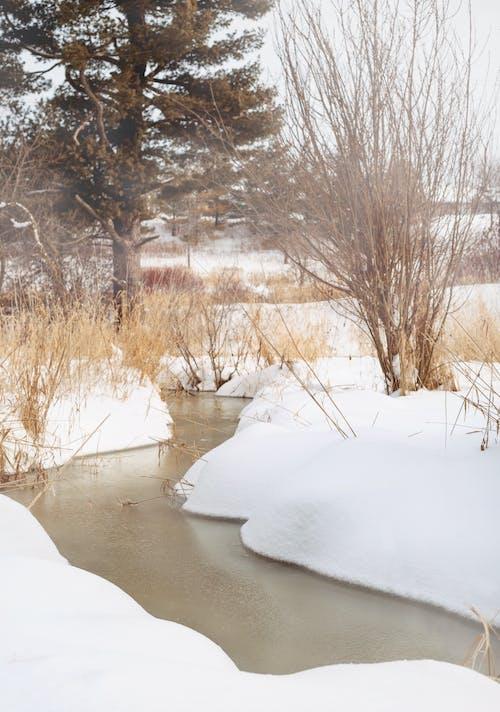 Бесплатное стоковое фото с дикий, зима, канада