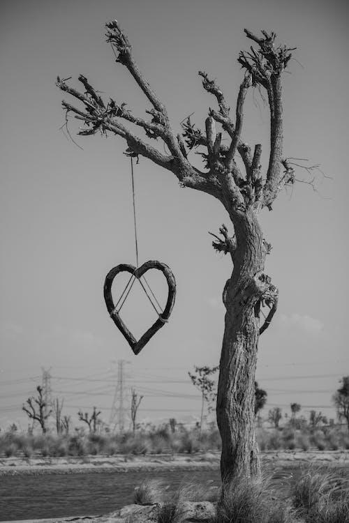 Free stock photo of black and white, heart, heart shape