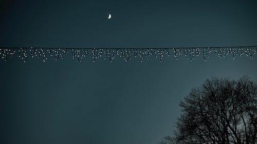 Gratis stockfoto met avond, boom, donker, duister
