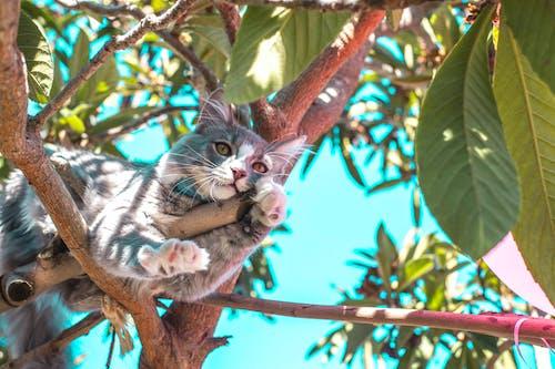 Gray Cat on Tree Branch