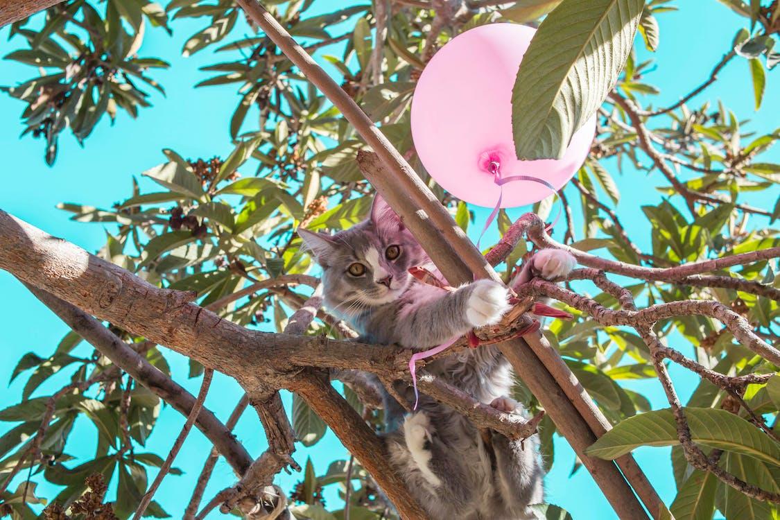 Gray Cat on Tree Branch Beside Balloon