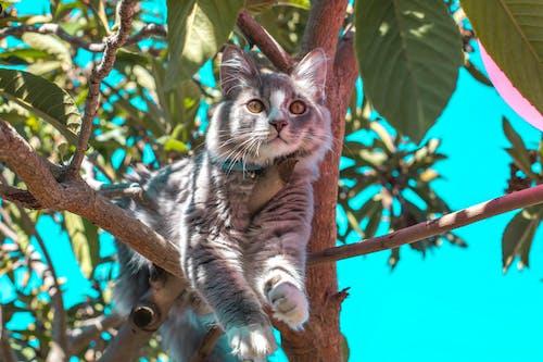 Darmowe zdjęcie z galerii z drzewo, fotografia zwierzęcia, futro, gałęzie