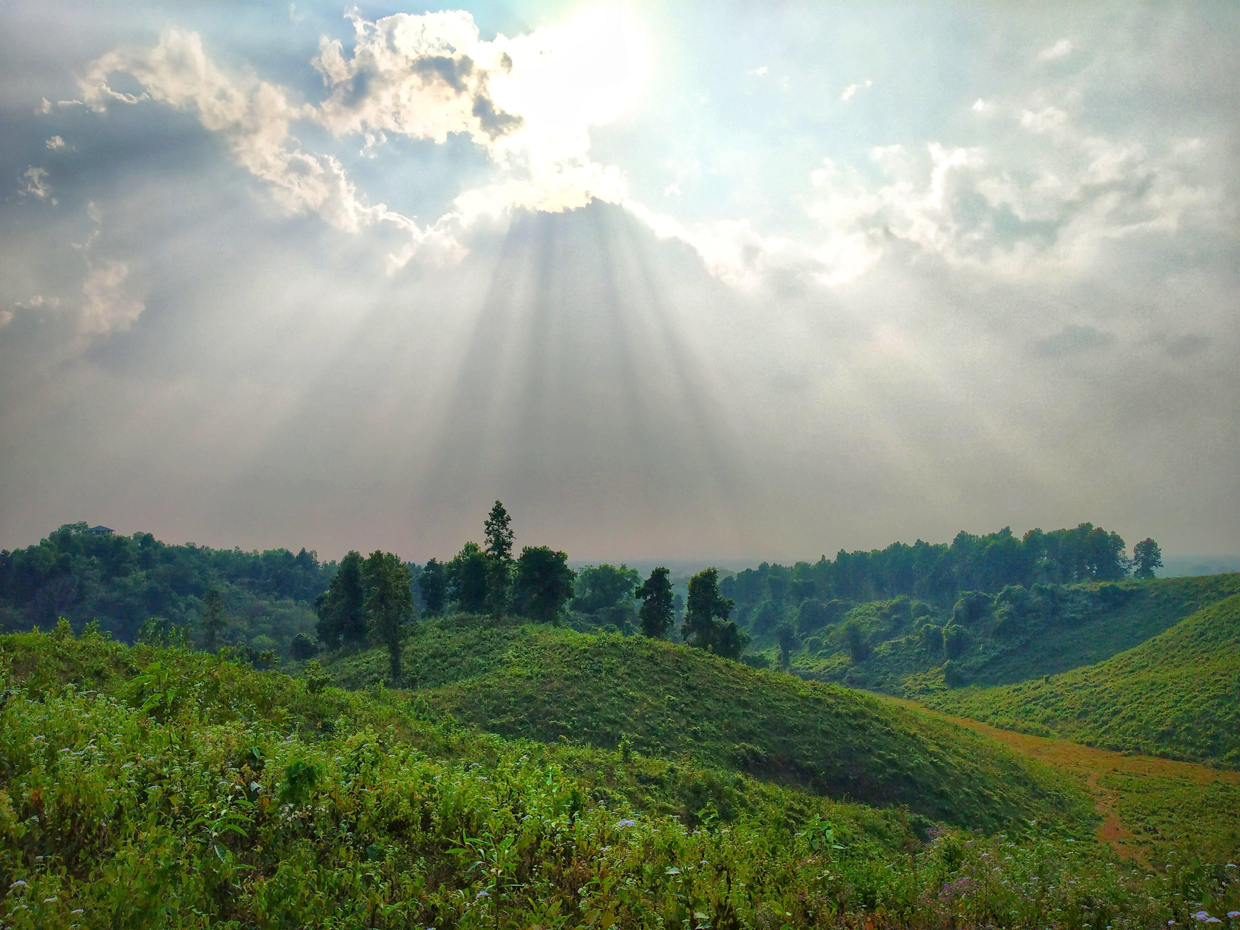 Ảnh lưu trữ miễn phí về ánh sáng ban ngày, bầu trời, cây, cỏ