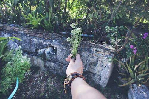 Foto d'estoc gratuïta de braç, braçalets, colors, creixement