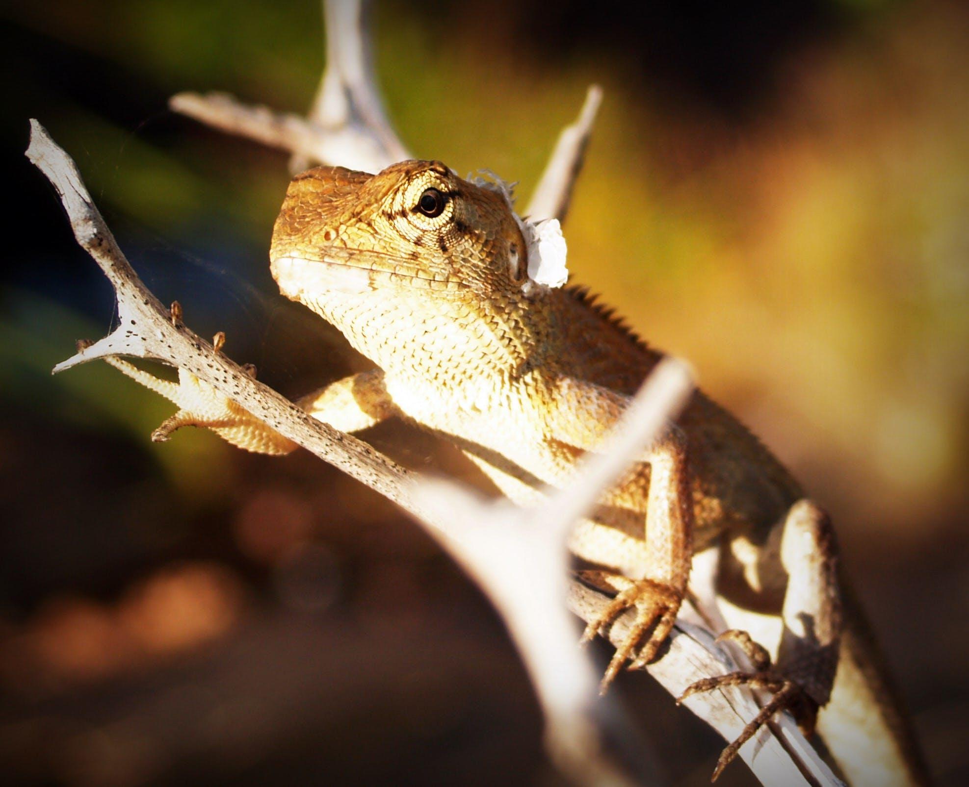 Fotobanka sbezplatnými fotkami na tému biológia, bočný pohľad, chameleón, denné svetlo