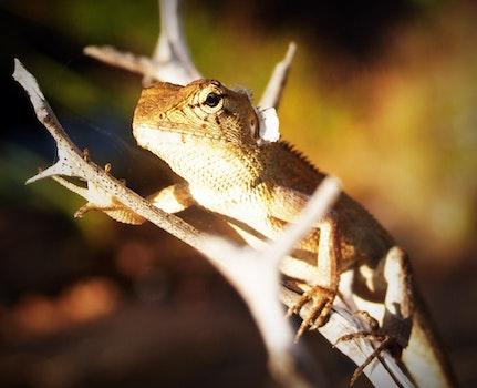 Free stock photo of nature, animal, head, lizard