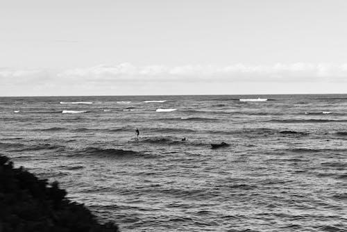 Hawaii, okyanus, sörfçü içeren Ücretsiz stok fotoğraf