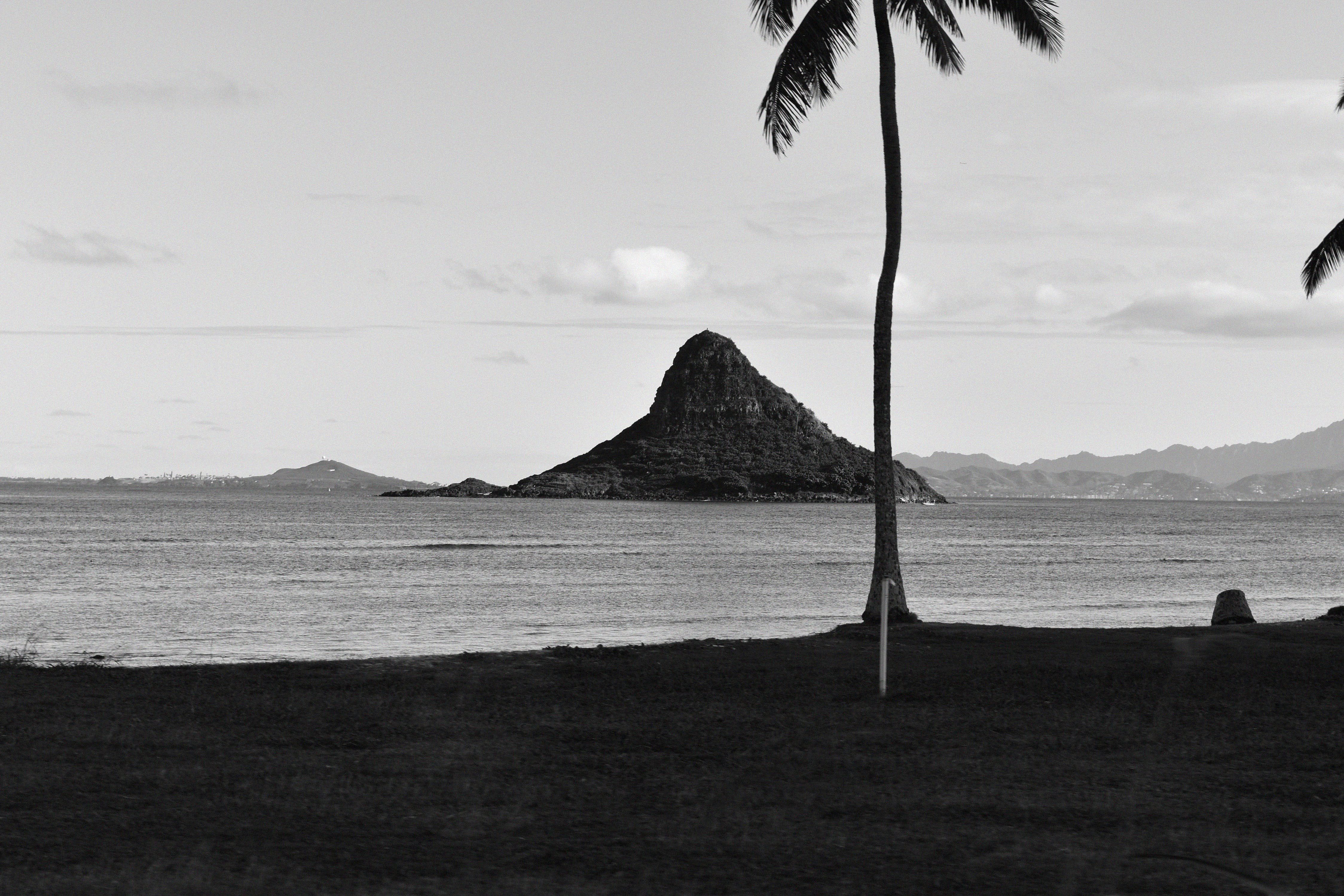 Free stock photo of background, black and white, ocean, palm tree