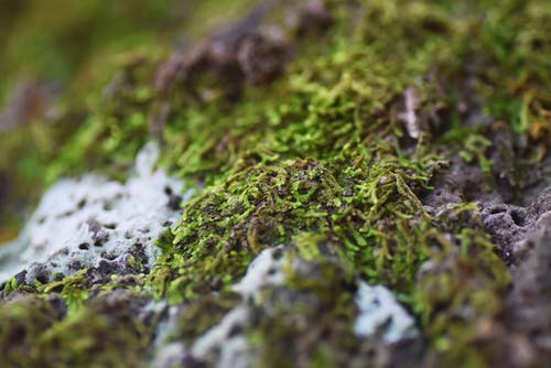 yeşil yosun, yosun içeren Ücretsiz stok fotoğraf