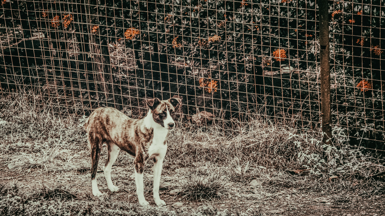 Foto stok gratis anjing