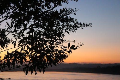 Gratis lagerfoto af solopgang, Thailand, træ, tur
