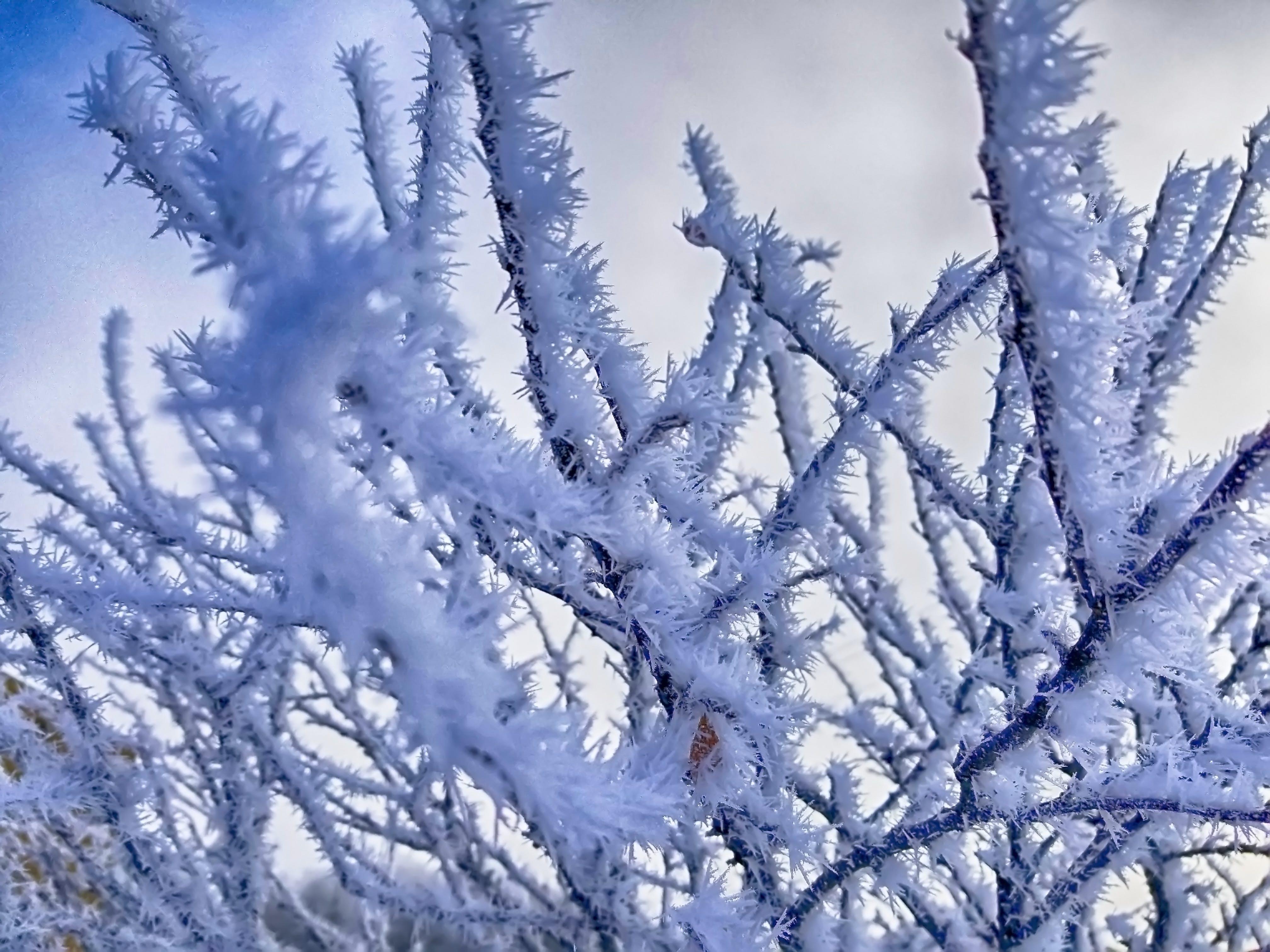 Foto d'estoc gratuïta de arbre, arbre congelat, arbre gelat, blanc