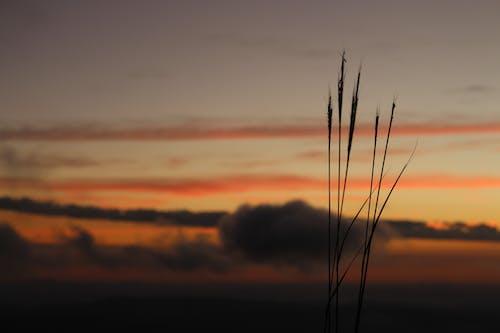 Gratis lagerfoto af græs, solnedgang, Thailand, tur