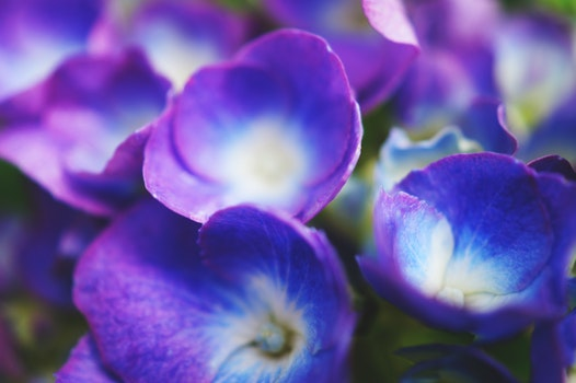Free stock photo of nature, flowers, purple, petals