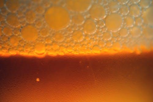 Základová fotografie zdarma na téma pivo