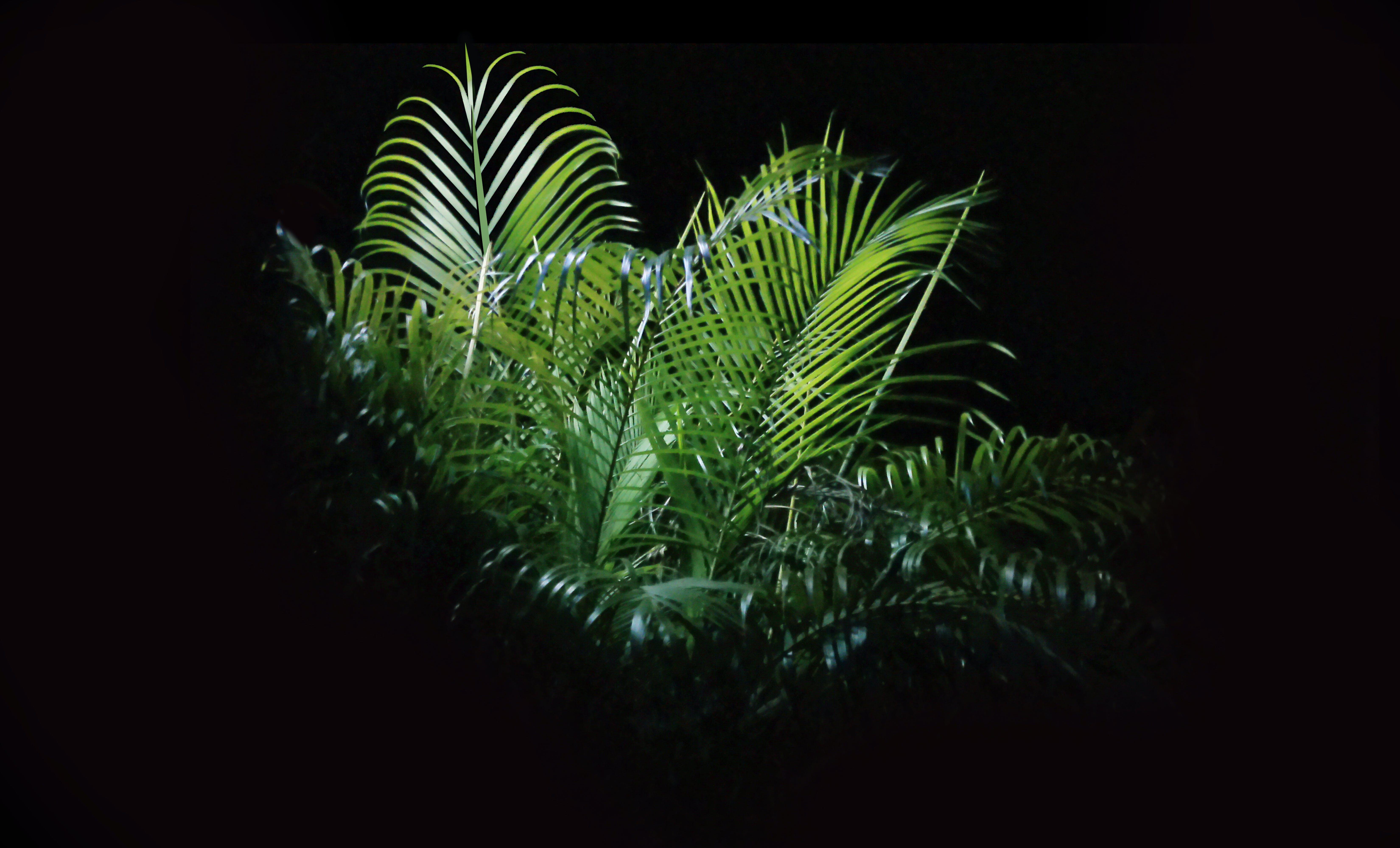 Macro Photo of Fern Plant