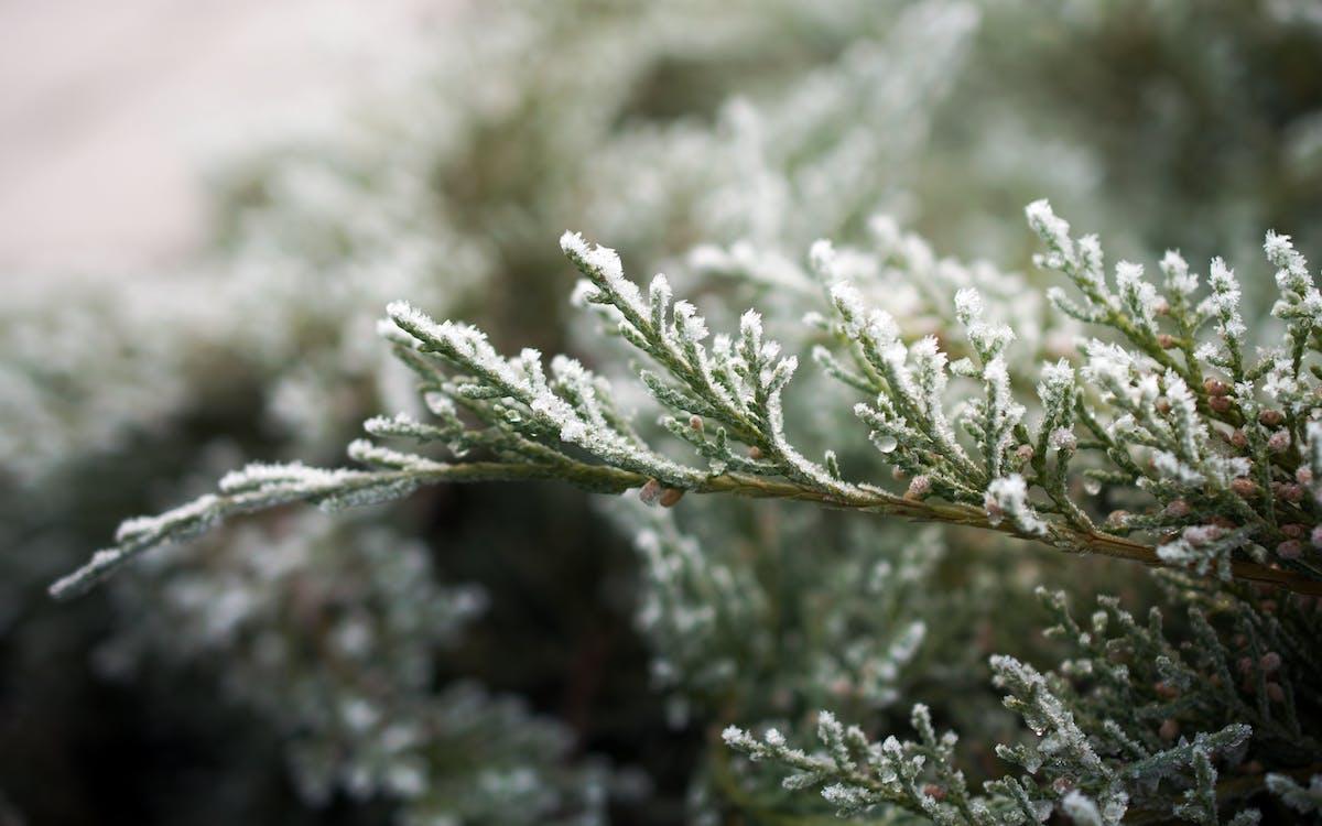 ago, albero, congelato
