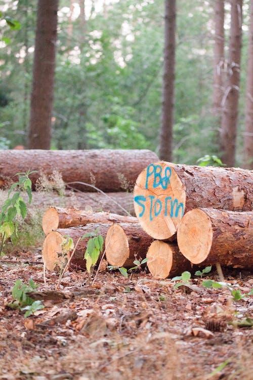 Foto d'estoc gratuïta de arbre, arbres, coberta d'arbres, després de la tempesta