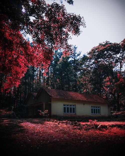 Foto d'estoc gratuïta de arbres, arquitectura, boscos, Índia