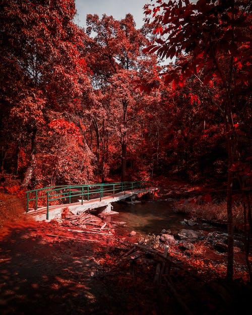 Бесплатное стоковое фото с деревья, индия, челендж на улице