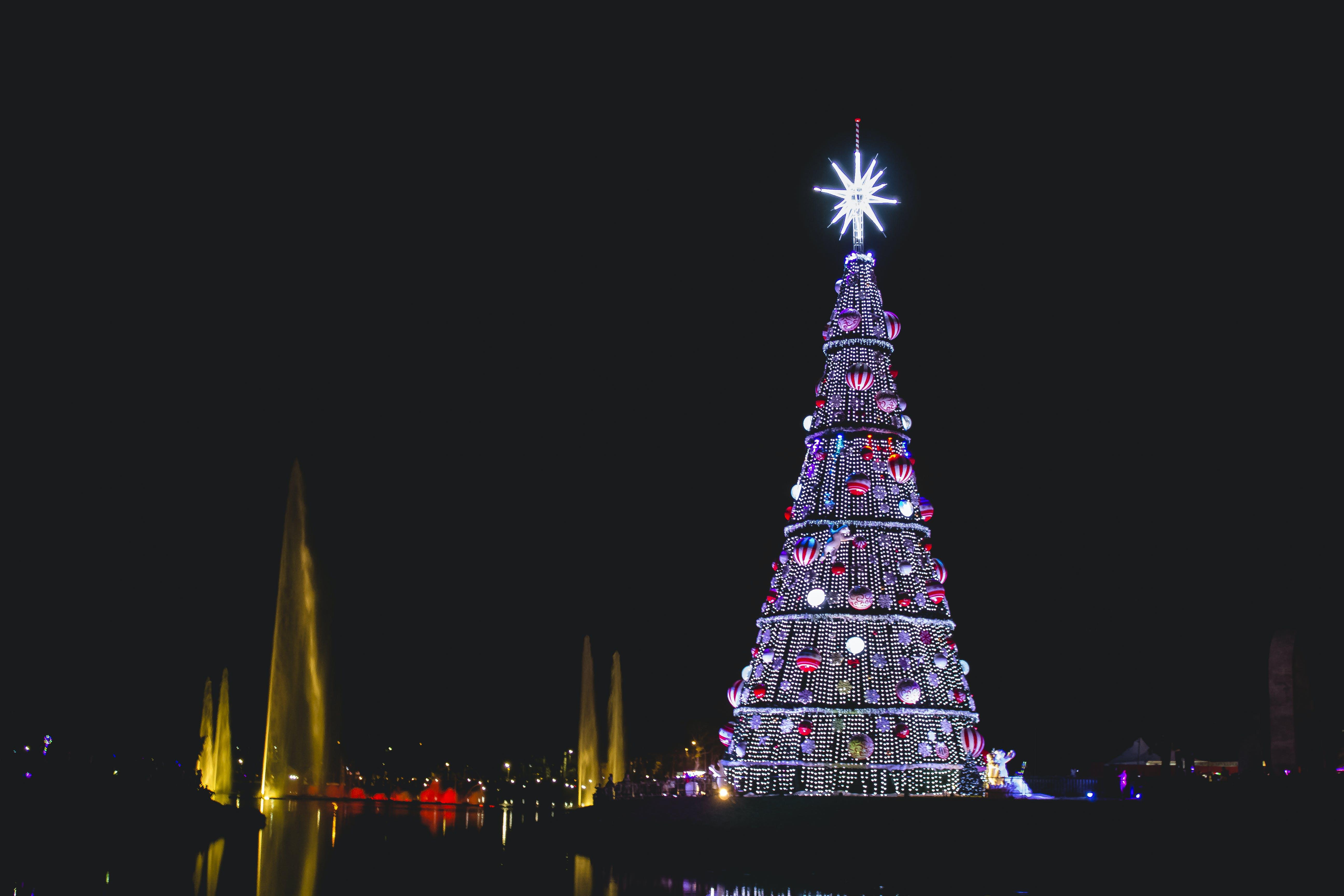 Foto profissional grátis de árvore, árvore de Natal, Brasil, cânone