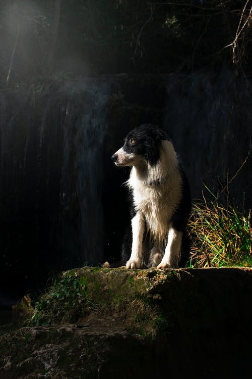 White and Black Dog Standing on Stone