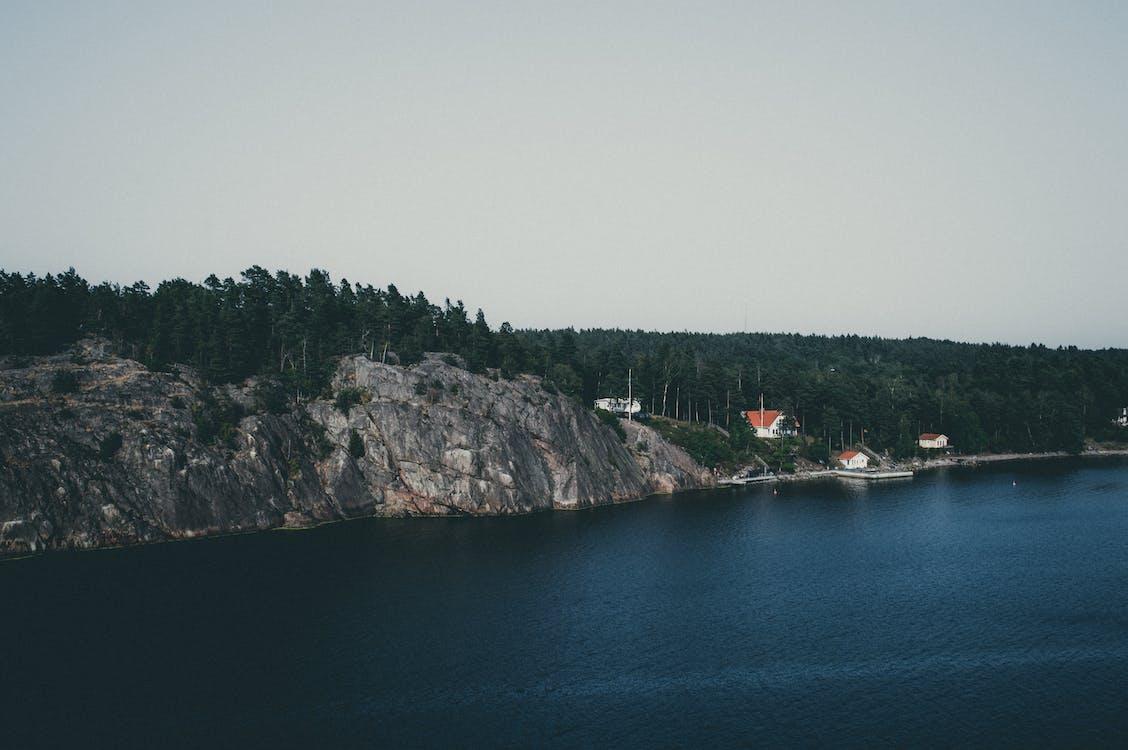 biển, biển Baltic, cây