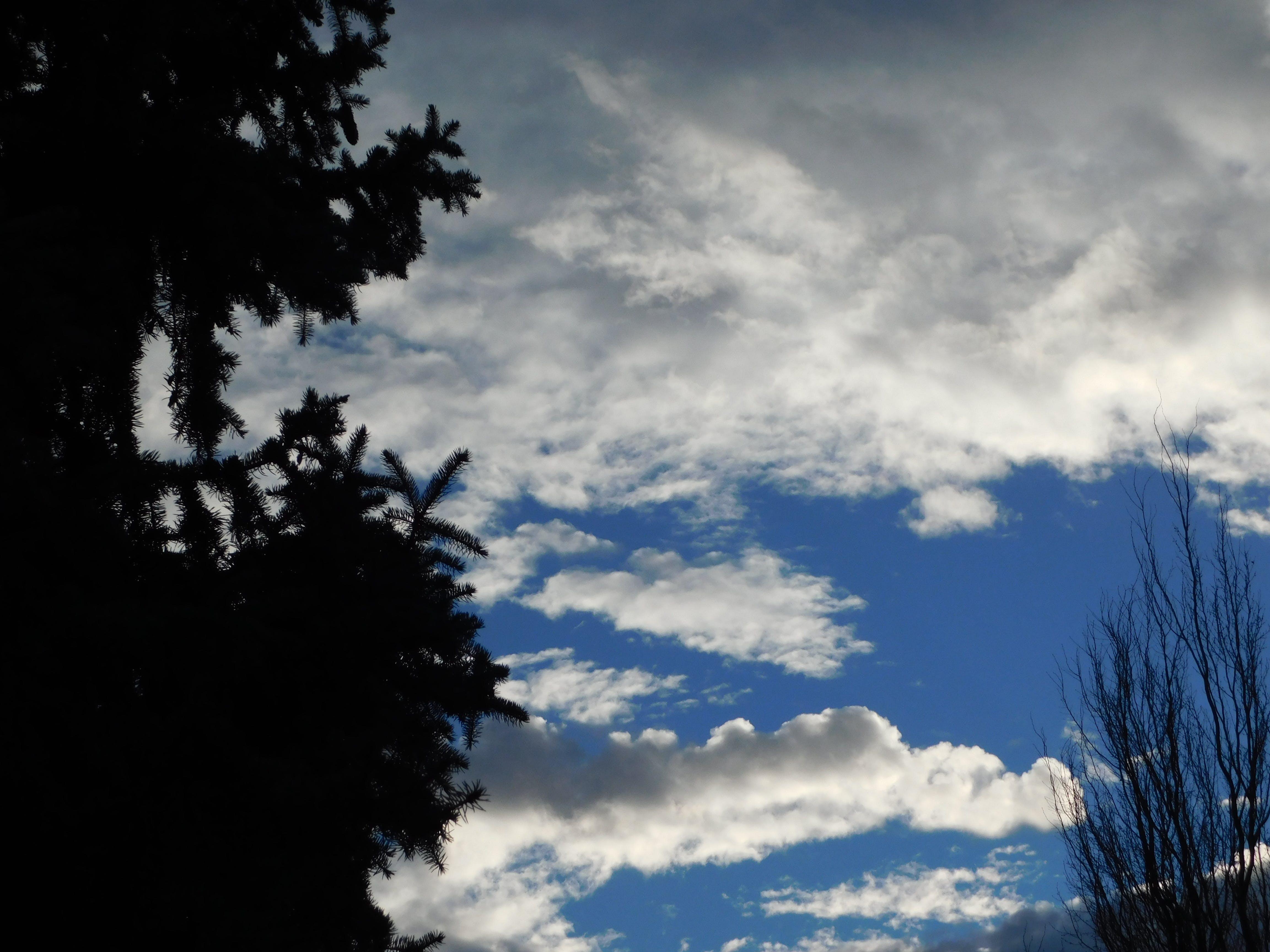Free stock photo of Winter sky