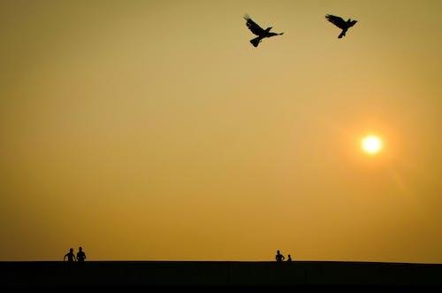 Δωρεάν στοκ φωτογραφιών με Άνθρωποι, δύση του ηλίου, χρυσός ήλιος