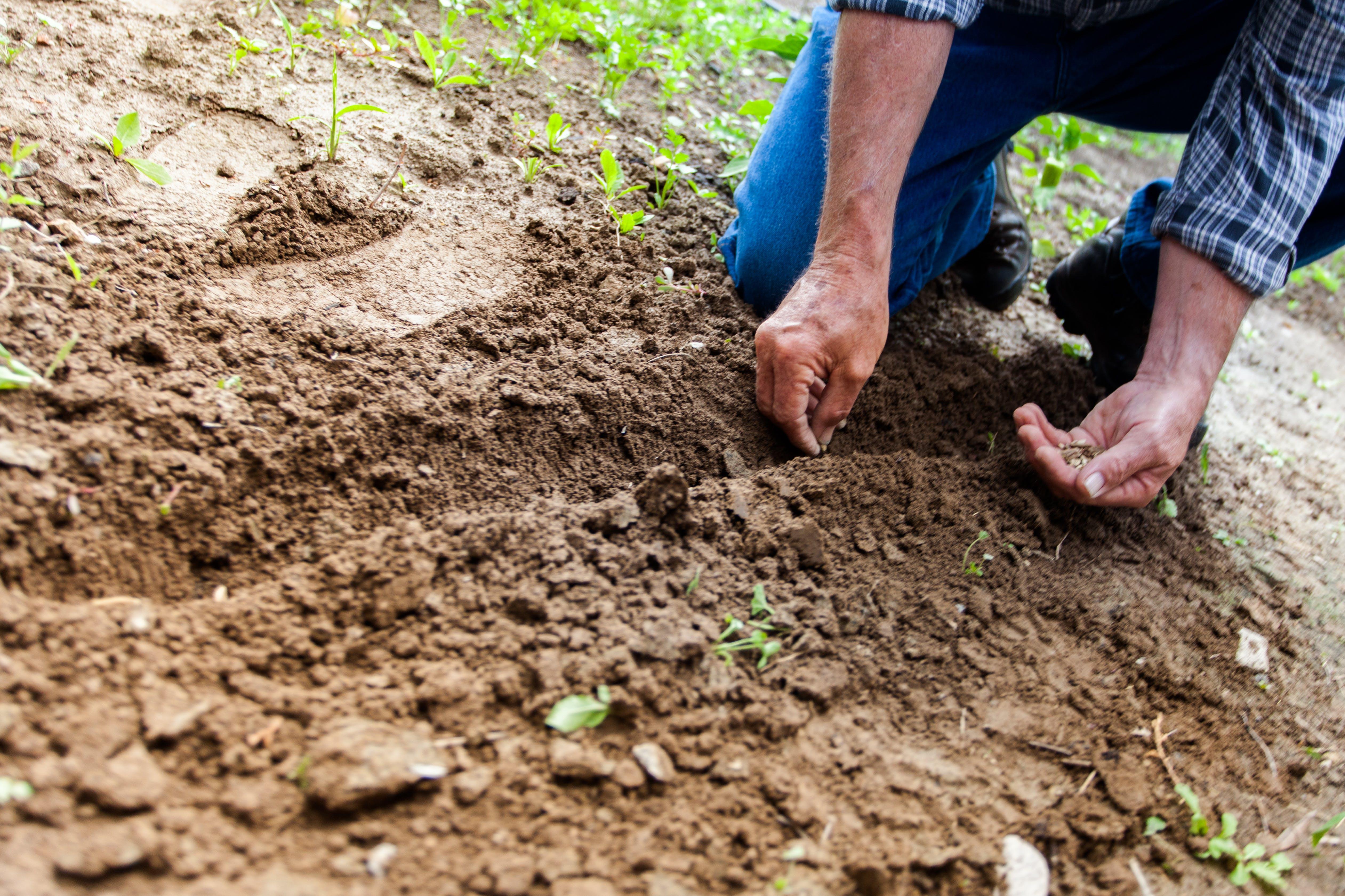 Kostenloses Stock Foto zu person, hände, garten, landwirtschaft